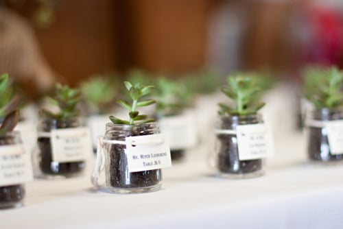 succulente mariage