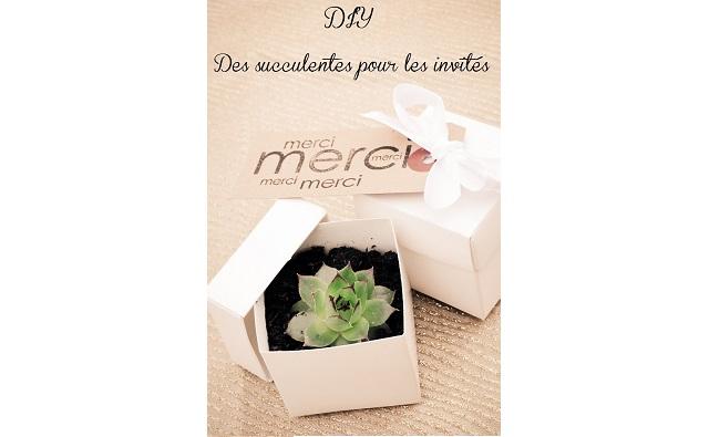diy mariage petit budget des succulentes en cadeau pour les invit s la mari e en col re blog. Black Bedroom Furniture Sets. Home Design Ideas