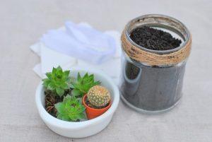 DIY-mariage-petit-budget-des-succulentes-en-cadeau-pour-les-invités-min