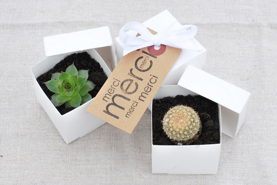 plantes grasses cadeau mariage invités-min
