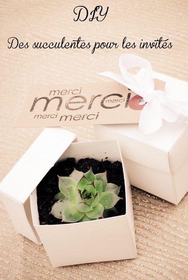 cadeau original et pas cher pour vos invit s mariage des succulentes. Black Bedroom Furniture Sets. Home Design Ideas