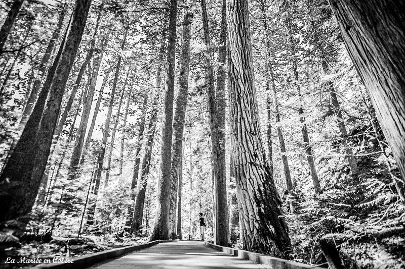 Trail of the cedars glacier national park