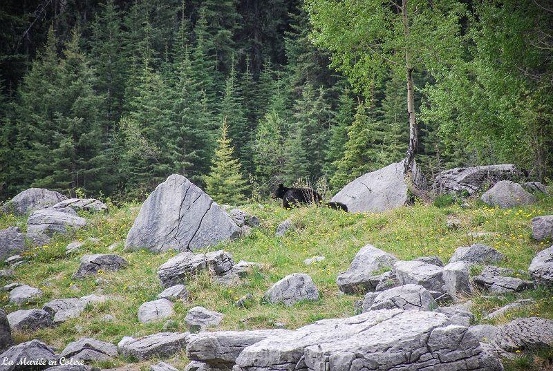 ours Jasper National Park