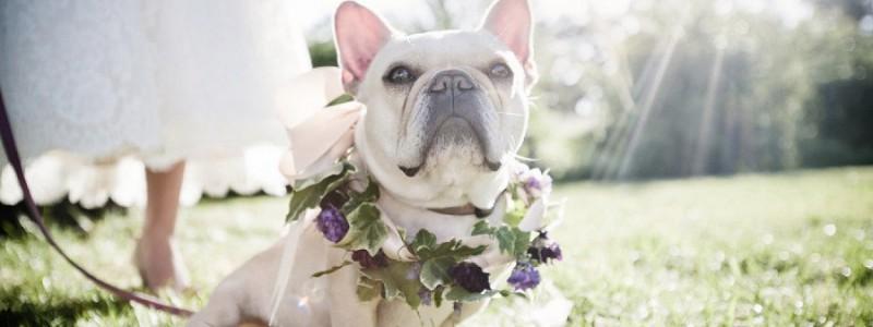 Et si notre chien participait au mariage ?