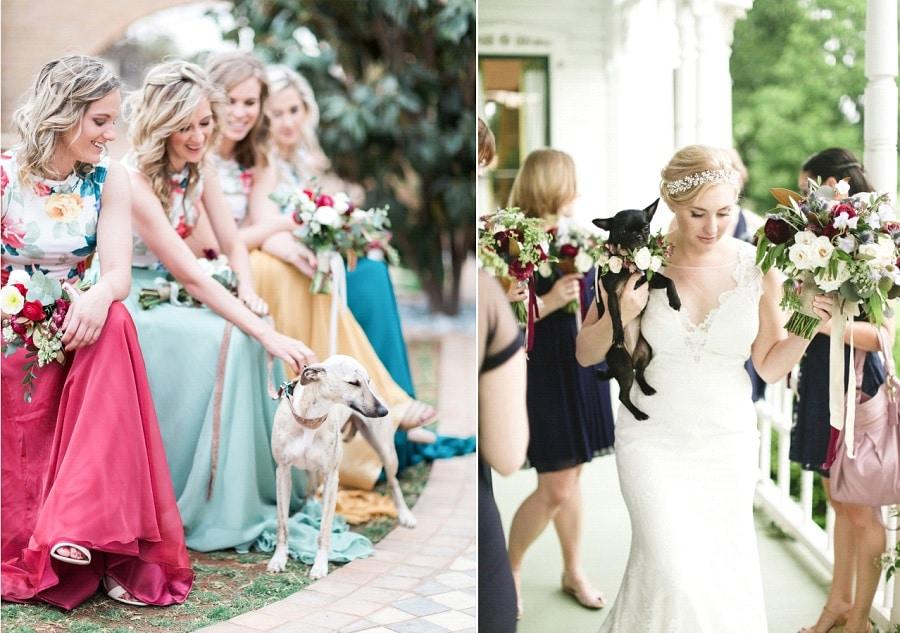 chien mariage