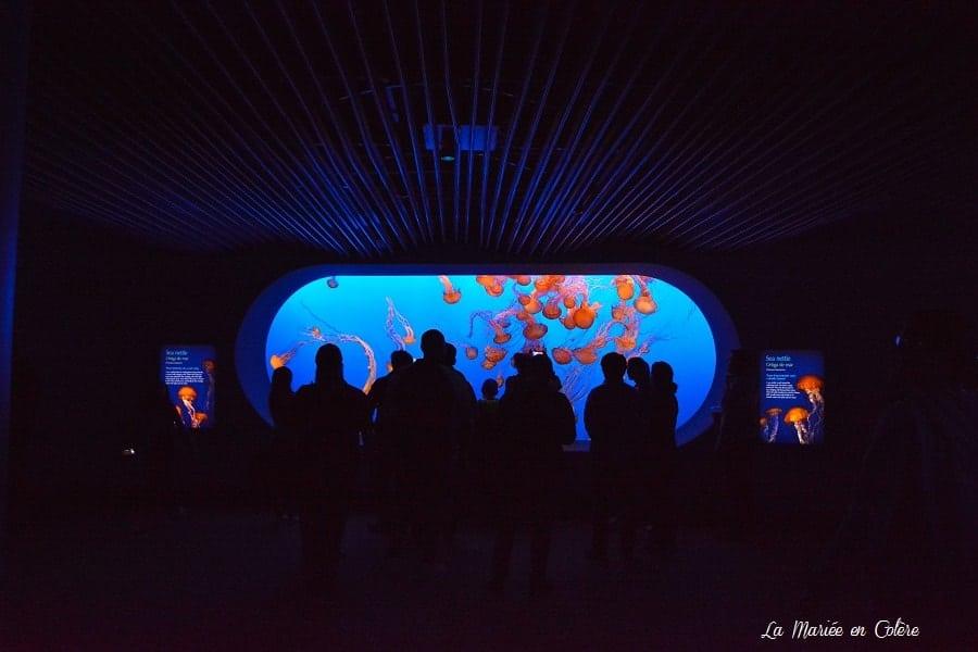 Aquarium de Monterey Californie