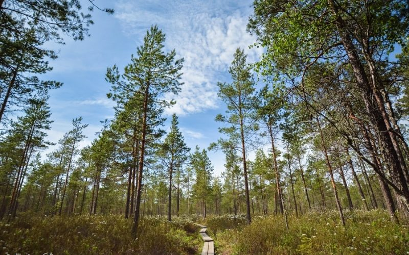 Destination familiale : la Slow Finlande ressourçante