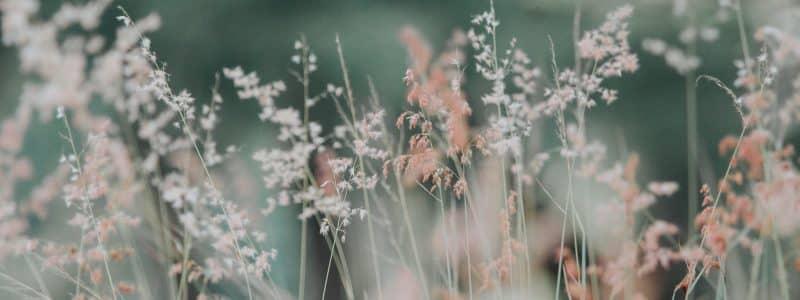 flora flowers grass nature