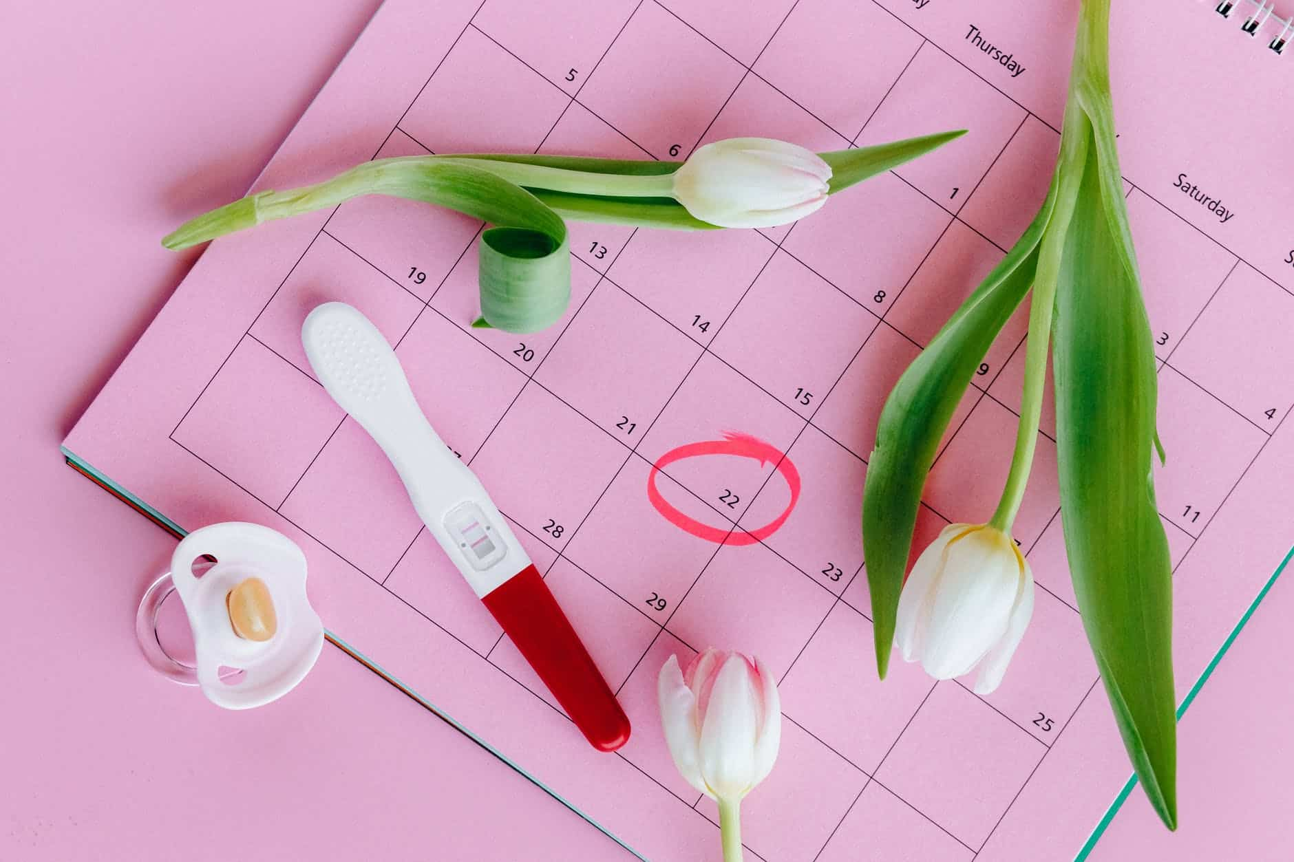 white and pink tulips on pink surface