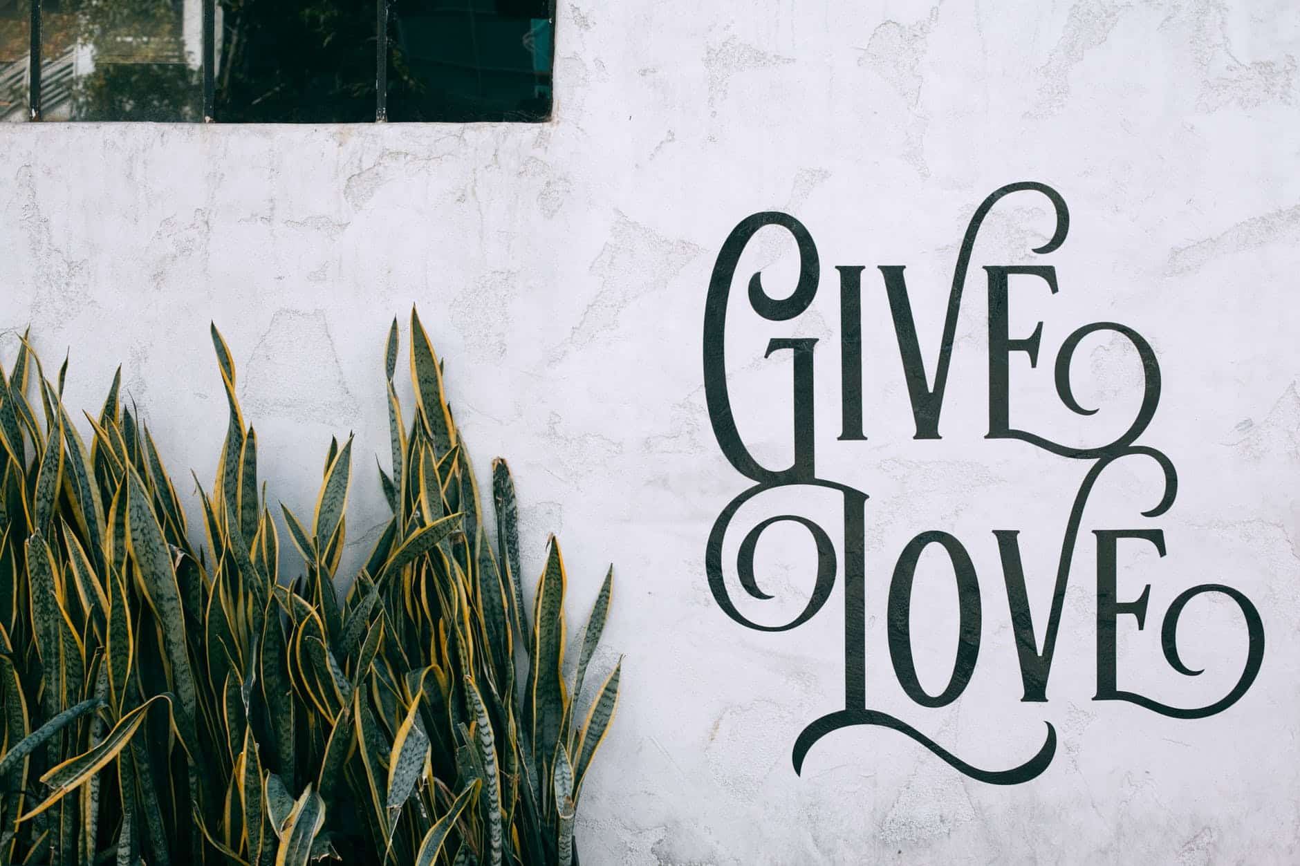 tropical dracaena trifasciata plant growing near wall with give love text