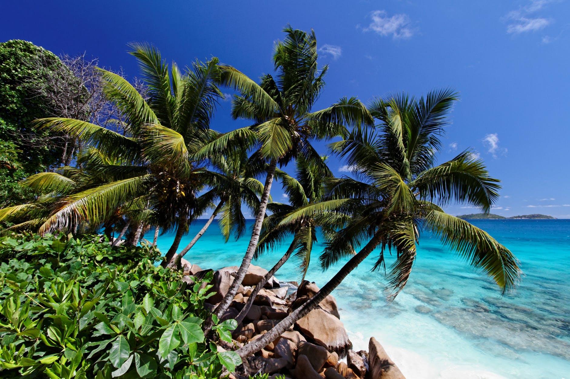 sea beach vacation sand